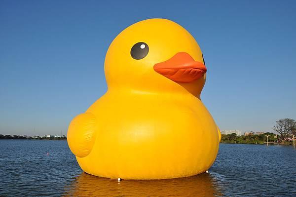 黃色小鴨 (33).jpg