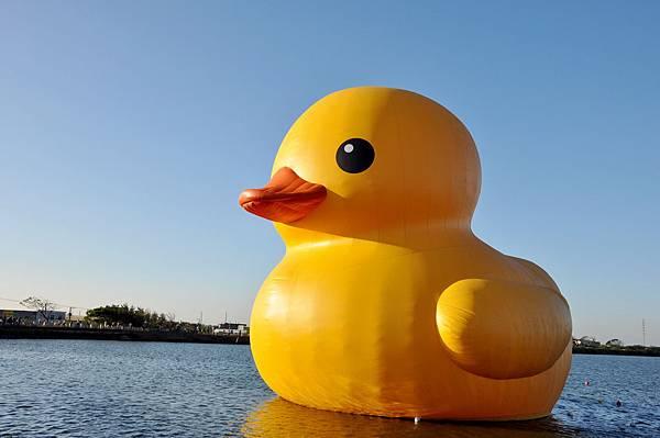 黃色小鴨 (39).jpg