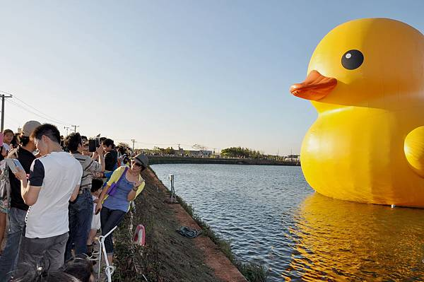 黃色小鴨 (40).jpg