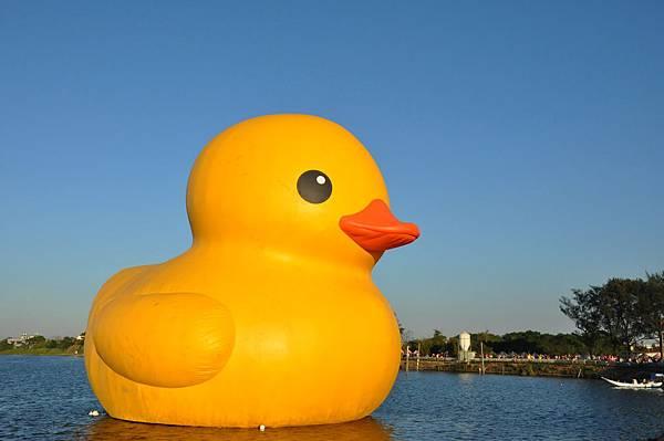 黃色小鴨 (29).jpg