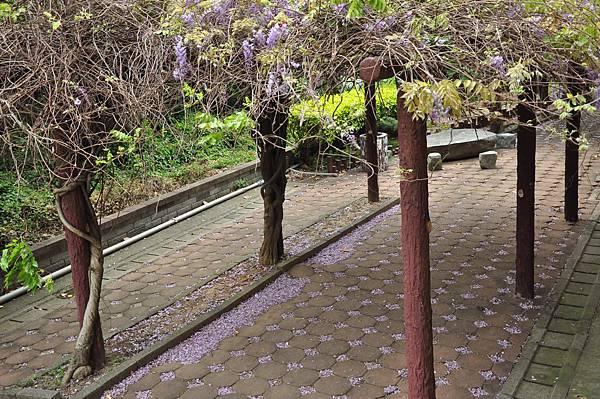 新豐鄉公所裏面的紫藤花 (64).JPG