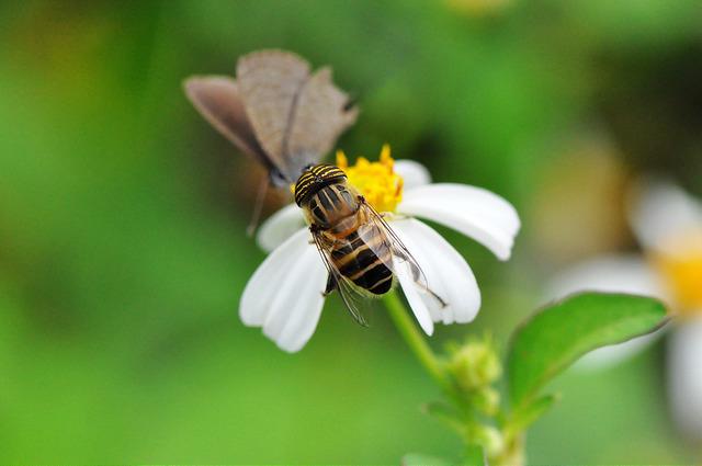 食蚜蠅7(1)