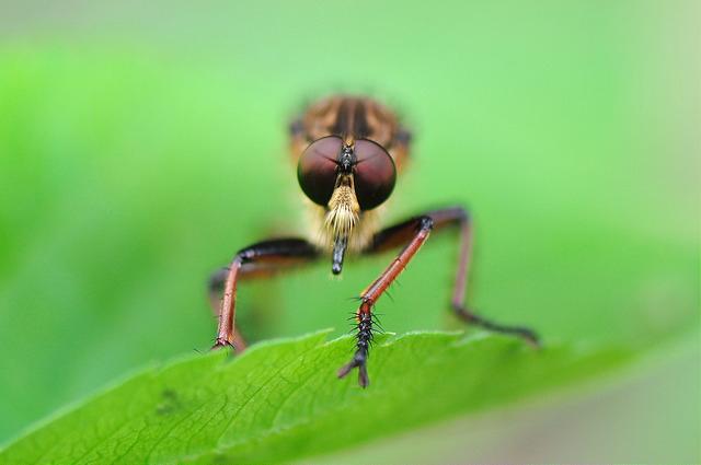 食蟲虻~2(待分類)