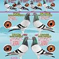 八方瀚業飛誌於五洲賽鴿2014.10月份廣告刊。