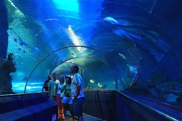 Underwater World (9).jpg