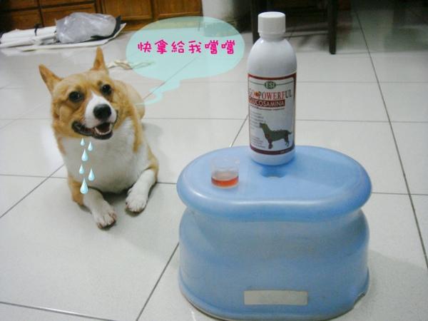 保健食品-狗1.JPG