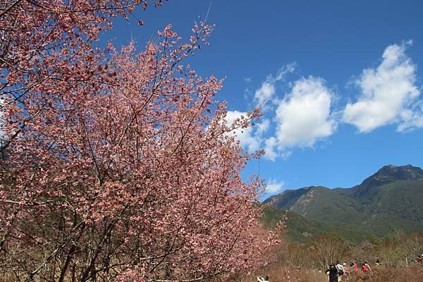 DPP_2014.2.23武陵櫻花祭(原始版)008.JPG