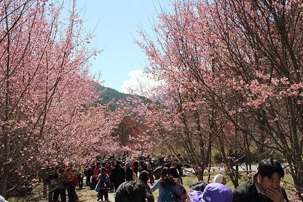 DPP_2014.2.23武陵櫻花祭(原始版)018.JPG