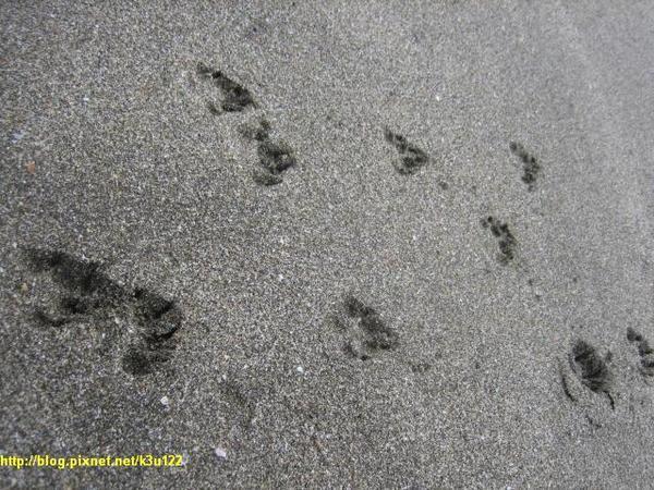 沙灘上柴妹的腳印