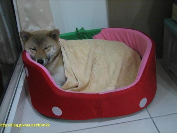 豪冷蓋棉被睡覺