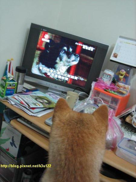 柴妹愛看寵物當家