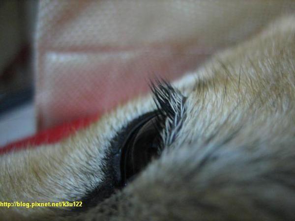 眼睫毛有兩層唷