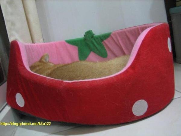 小草莓還是歪的也能睡