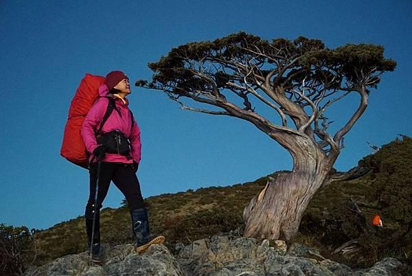 向陽名樹.jpg