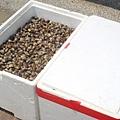 【97年9月】一箱箱的蛤蜊