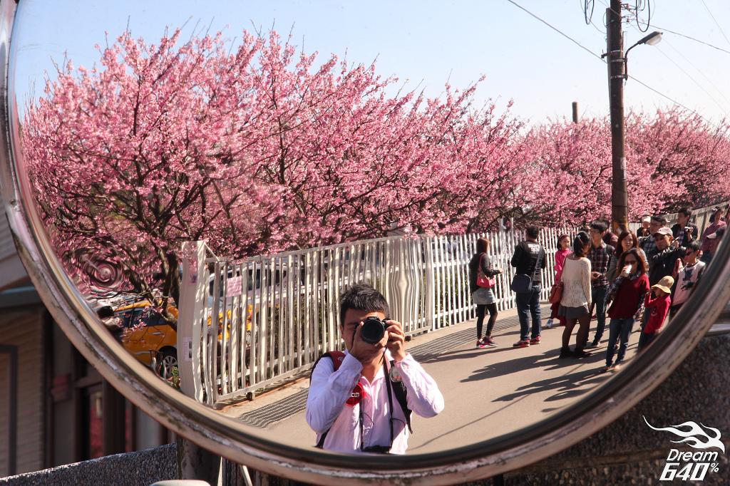[2014賞櫻] 平菁街42巷-民宅佛心開放參觀。史上最長好天氣