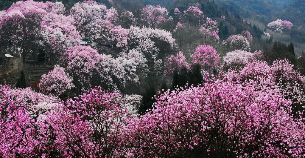 北川藥王谷旅遊度假區
