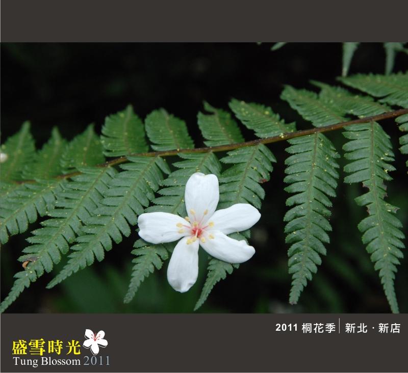 盛雪時光2011-9.jpg