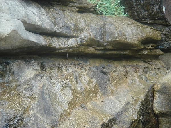 岩間的滴滴滲水