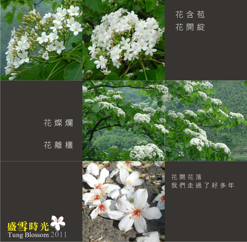 盛雪時光2011-3.jpg