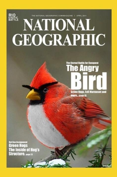 憤怒鳥被找到了.jpg