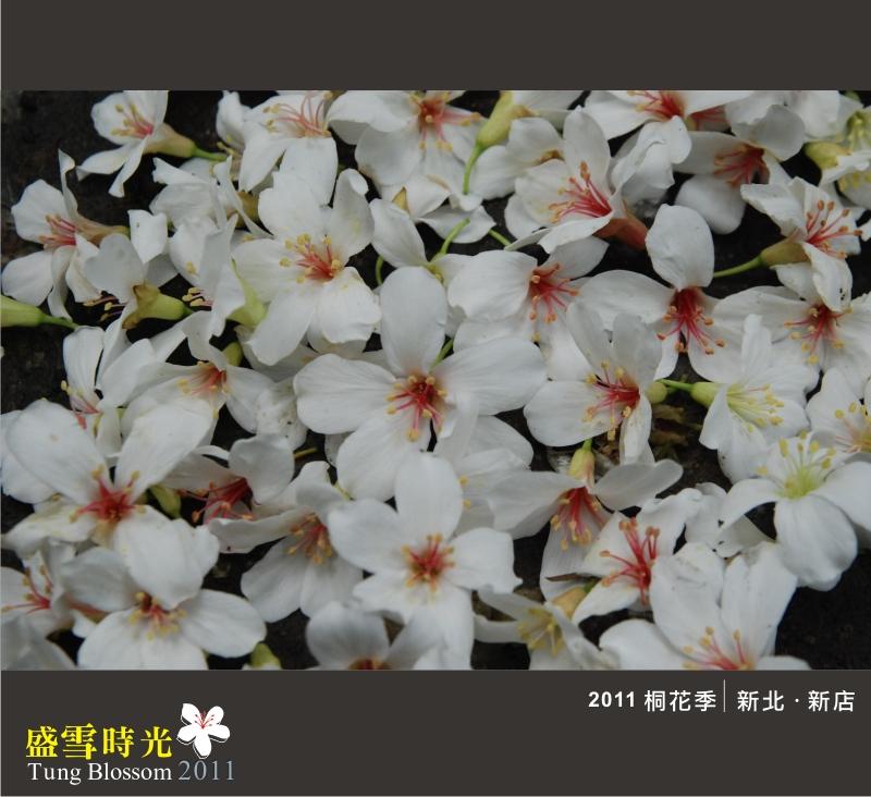 盛雪時光2011-16.jpg