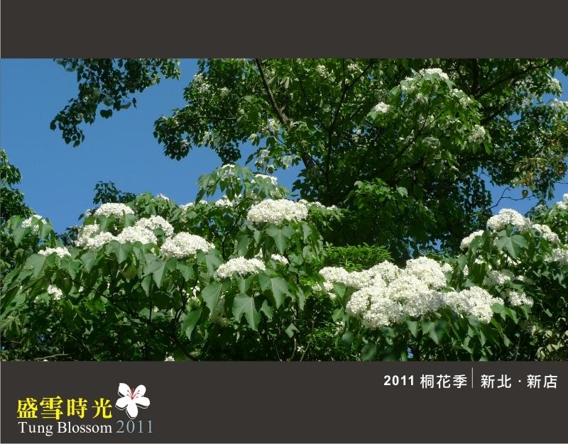 盛雪時光2011-11.jpg
