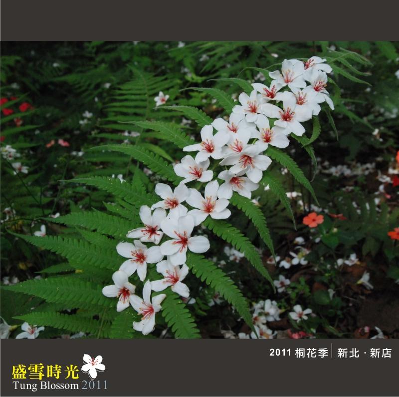 盛雪時光2011-18.jpg