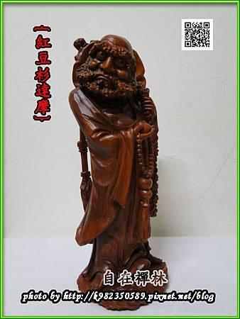 紅豆杉達摩~自在禪林~48cm半140408d.jpg