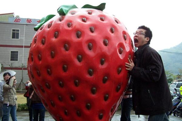 如果真的有這麼大顆的草莓可以吃就好了