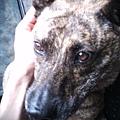 lomo 2010 pic 049.jpg