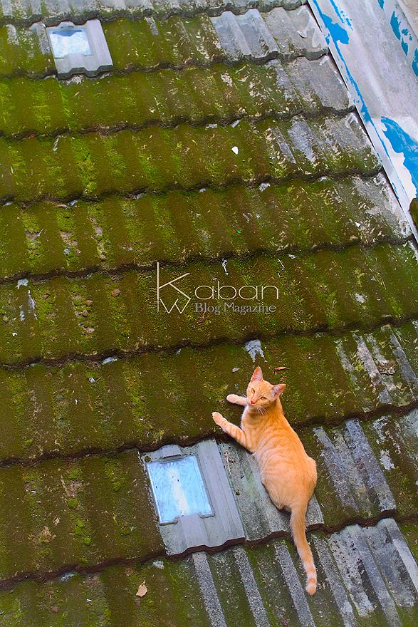 屋頂上的貓咪