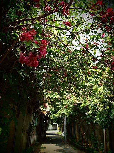 鄭州街卷春-牛肉麵老街