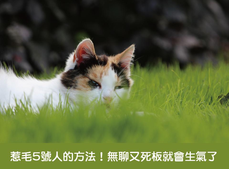 花言寺文創-生命密碼-生命靈數-5號人生氣.jpg