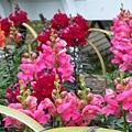 其他的花類