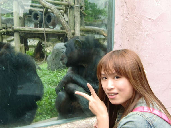 這兩隻黑猩猩也備受矚目