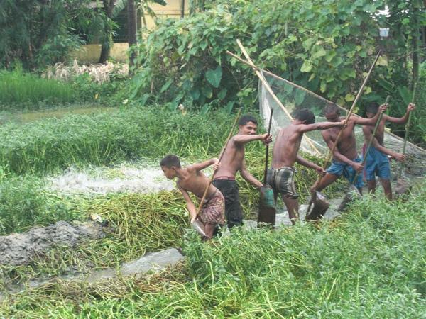 孟加拉農人們正在挑水灌溉