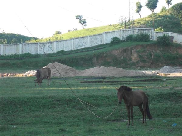 Sylhet農業大學內