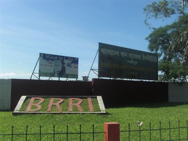 孟加拉水稻研究中心