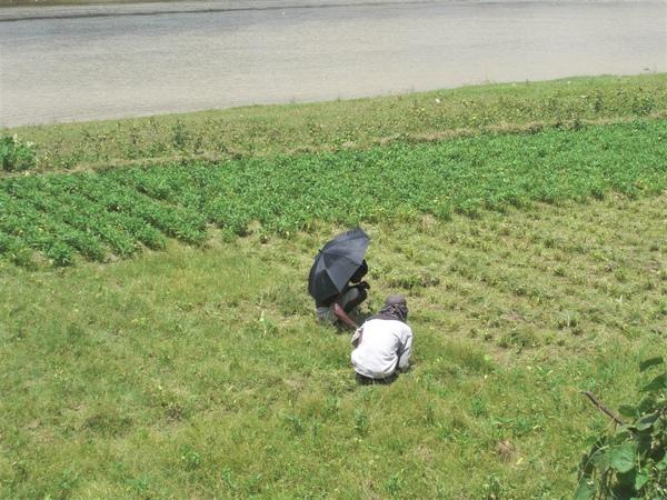 田裡的農人