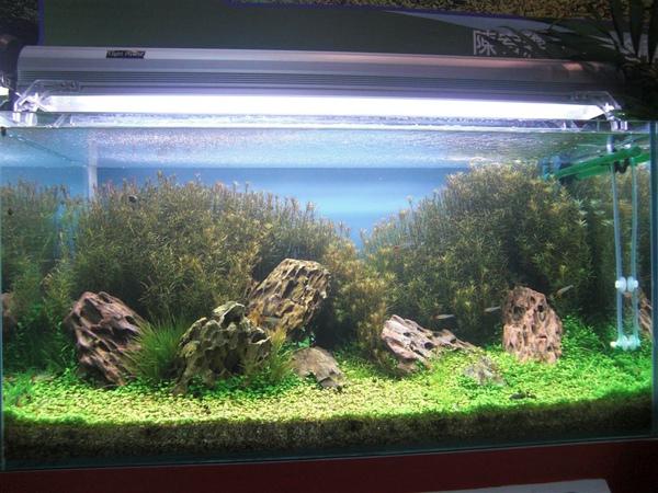 魚缸設計2