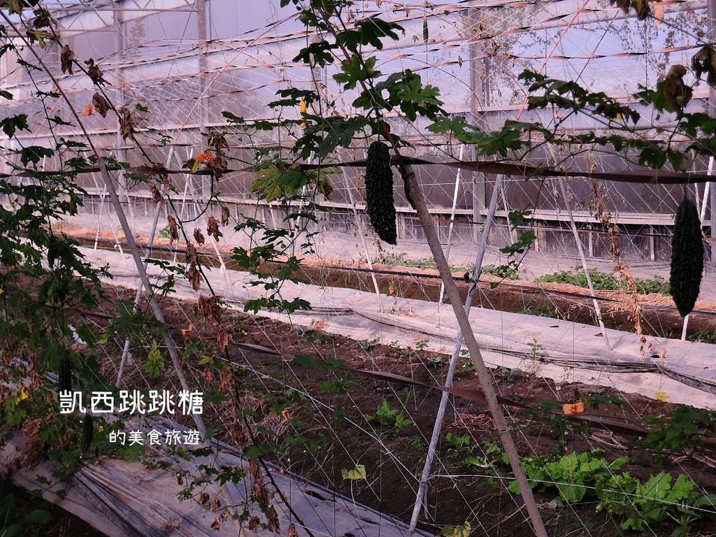 凱西跳跳糖 雲林水林 烏克麗麗 小日月潭041.JPG