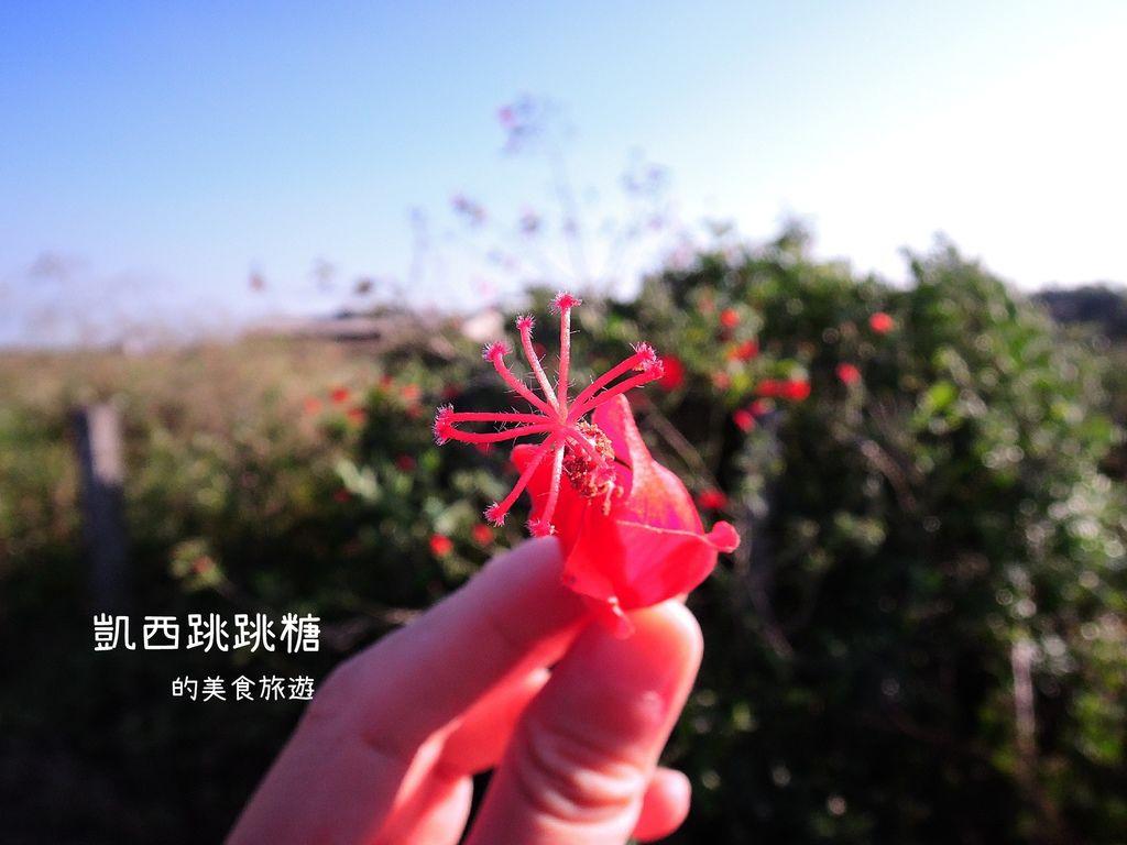 凱西跳跳糖 雲林水林 烏克麗麗 小日月潭091.JPG