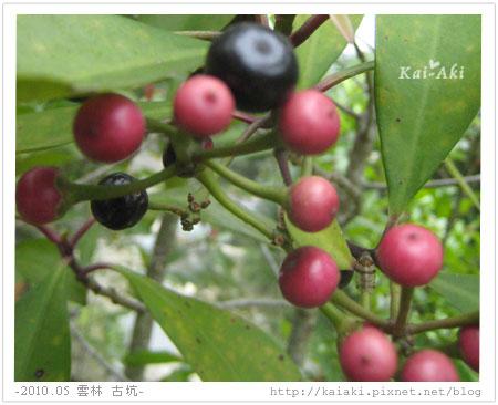 201005 華山 文學步道-咖啡豆