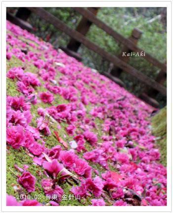 櫻花撲的粉紅步道