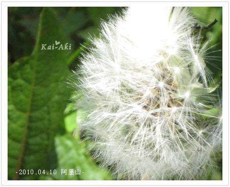 20100410阿里山