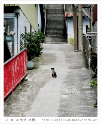 南投車埕-街上的小貓.jpg