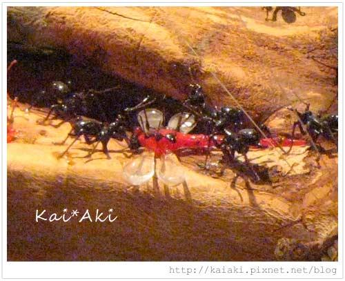 玻璃館-螞蟻.jpg