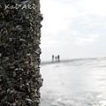 王功漁港濕地1.jpg