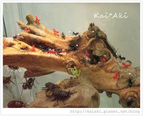 玻璃館-螞蟻1.jpg